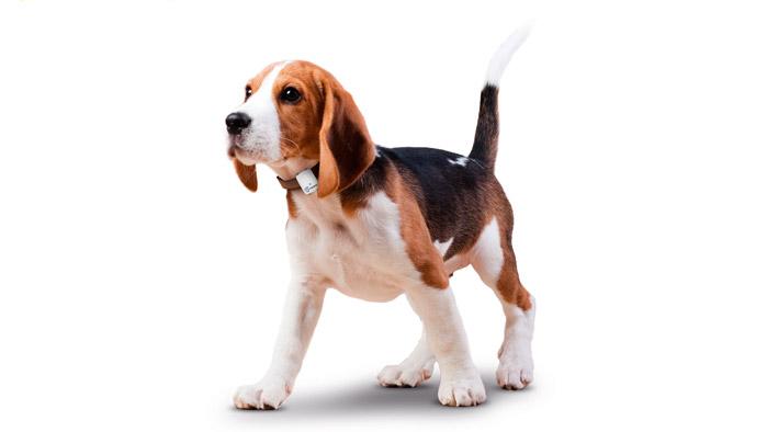 Hund, der das Tractive-Halsband trägt